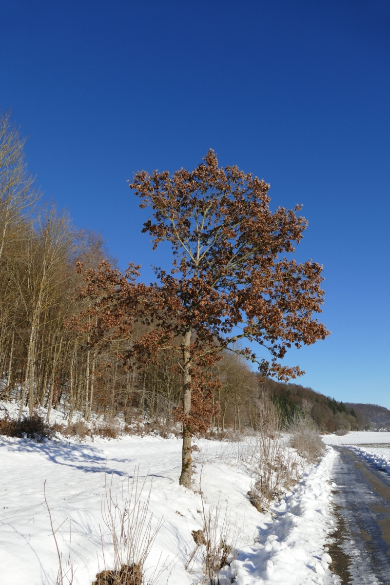 Baum Winter